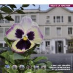 Ville de Genève: des pensées contre l'homophobie et la transphobie